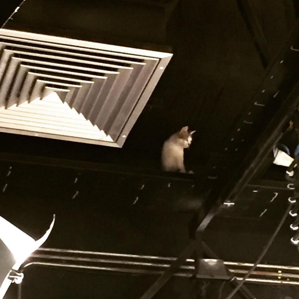گربه در استودیو