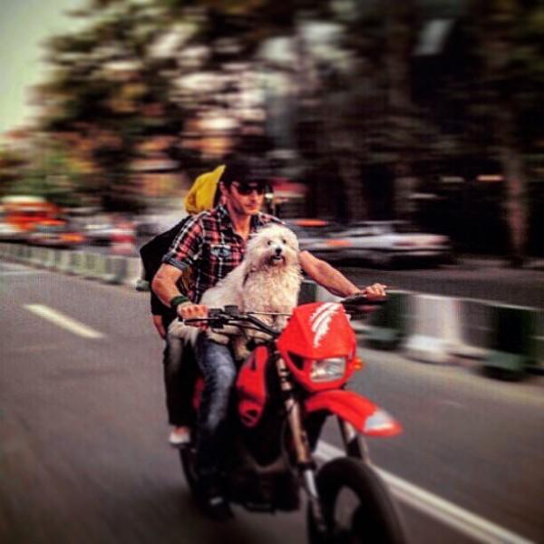 رامین پرچمی،سگش و همراهی گمنام سوار بر موتور