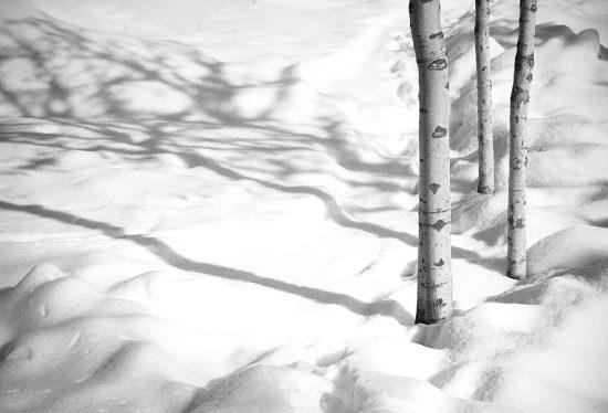 عکسی از مجموعه سفید برفی کیارستمی